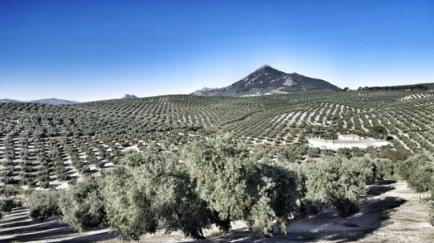 andalusian-olive-grove-esao-pao-4-0-program