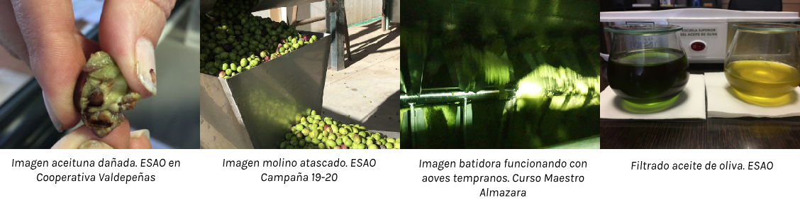 filtrado-batido-aceite-oliva-esao
