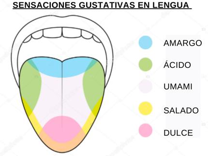 lengua sabores castellano